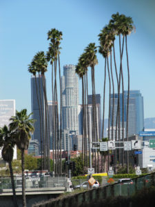 Los Angeles Palm Trees and Buildings